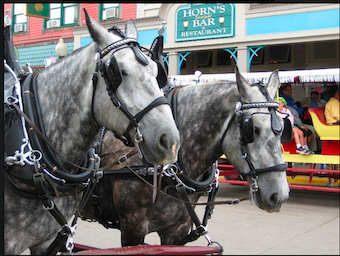 Mackinac Island is primarily known for two things - FUDGE and these guys.